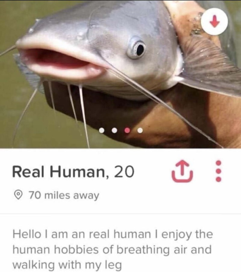 dating-app-profile-of-a-catfish-pretending-to-be-a-human.jpg