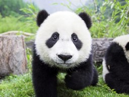 PandaVadimovna1